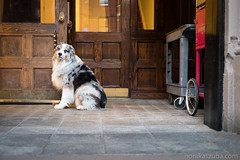 Waiting (Nora Kaszuba) Tags: dog waiting shop door newburystreet bostonmassachusetts fujixt2 norakaszuba fujifilm35mmf2