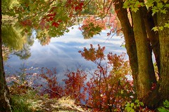 Fall Reflections (CdnAvSpotter) Tags: fall autumn reflection nature tree trees leaves water river lake pond landscape petrie island ottawa orleans ontario canada canoneos1dxmarkii canon 1dx2 serene calm relaxing mesmerizing postcard picture perfect
