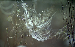 Mrs. Spider's Artwork (ursulamller900) Tags: webart artwork spiderweb spinnwebe morningdew droplets pentacon28100