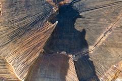 ckuchem-7091 (christine_kuchem) Tags: wald holz baumstamm struktur ringe jahresringe schnitt baumscheibe scheibe baum angeholzt