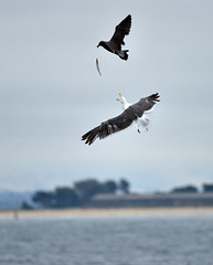 catch of the day (lis maree) Tags: bird flight fish stealing