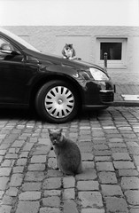 Feline hood ornament (Alexander  Bulmahn) Tags: cats hood vw bremen canon al 1 fd 50mm f18 ilford delta 400 xelriade