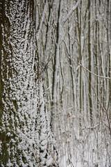 ckuchem-1644 (christine_kuchem) Tags: baumrinde buche bume eiche eis frost hainbuche natur pfad pflanzen ruhe samen spuren stille struktur wald weg wildpflanzen winter einsam kalt schnee ste