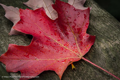20161001-IMG_3099.jpg (Paul Henman) Tags: toronto torontophotowalks topwwwpw2016 photowalk httppaulhenmanphotographyca ontario canada 2016 topw worldwidephotowalk2016 wwpw2016