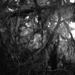 Pramo de Matarredonda (V) (matteoprez) Tags: precious elprecious matteoprezioso matteopreziosophotography matteopreziosofotografa matteopreziosofotografia blackwhite blancoynegro biancoenero pramo matarredonda pramodematarredonda pramomatarredonda colombia analogico anlogo analog autaut noiretblanc blackandwhite monochrome diydevelopment selfdeveloped homedeveloped tlr twinlensreflex hc110 kodakhc110 dilutionh rolleiflex automatmx tessar zeisstessar carlzeisstessar 75mm135 kodak trix trix400 kodaktrix400 iso400 matteopreziosotumblrcom httpswwwtwittercommatteoprez httpsmatteopreziosotumblrcom outdoor mist noedit nofilter ishootfilm filmisnotdead believeinfilm filmfeed heyfsc shotonfilm onfilm filmisalive filmisawesome analogphotography filmdev:recipe=10992 film:brand=kodak film:name=kodaktrix400 film:iso=400 developer:brand=kodak developer:name=kodakhc110 sekonic l398 sekonicl398