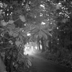 Tunnel of trees (odeleapple) Tags: mamiya c330 mamiyasekor 65mm neopan100acros film bw tunnel tree leaf