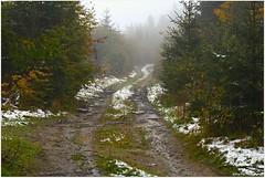 first snow (mayflower31) Tags: schnee snow wald forest weg nebel fog