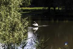 Natuurpark Lelystad 10-2016
