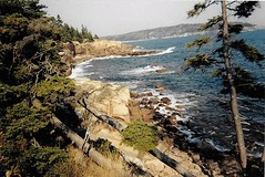 Maine Coast (Shot by Newman) Tags: trees water shoreline northernmaine nature shotbynewman waves atlanticocean oceanview kodakcolor kodak400 35mm daylight