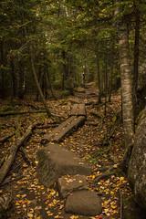 Mt Jo (THartin) Tags: newyork adirondacks adk mtjo hikingtrail hiking dayhike