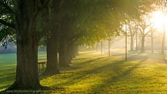 Morning-light (ratulm) Tags: stjamesfarm dupage fog mist trees light sunrise warmth fall autumn golden sun forest