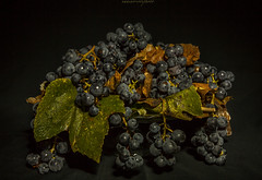 grape strawberry (nadiaorioliphoto) Tags: grape stllife autumn fruit sfondonero interni