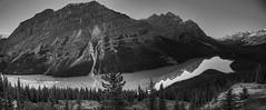 Peyto Lake - Panorama in B&W (John Payzant) Tags: peyto lake hdr panorama banff alberta canada park