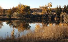 late day, late fall (Jeff Mitton) Tags: bouldercountyopenspaceandmountainparks fall autumn reflection earthnaturelife wondersofnature