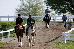 Thursday at the 2013 Rolex (Tackshots) Tags: lexington rolex dressage eventing kentuckyhorsepark