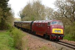 "D821 ""Greyhound"" - Warship Class (Simon Crowther Photography) Tags: heritage history train flickr br railway preserved svr arley severnvalleyrailway britishrailways arleystation westernregion"