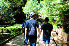 Hiking with the boys (kathyparmisano) Tags: california nature hiking muirwoods hikers