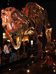 Tyrannosaurus Rex @ Royal Tyrell Museum (Explore # 322 May 21st 2013) (LostMyHeadache: Absolutely Free *) Tags: old people museum canon fossil dinosaur display head teeth exhibit explore bones claws deadly tyrannosaurusrex davidsmith thunderlizard royaltyrellmuseum explored calgaryalbertacanada boneas eos60d