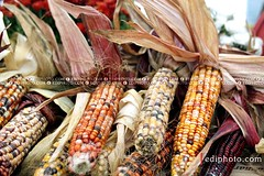 Maize 1020989 (ediphoto.com) Tags: stilllife corn maize edibles