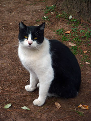 P1040233 (Nikoyan30) Tags: cats cat kitten gatos gato