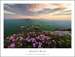 Spring Peak (DKNC) Tags: sunrise nc spring northcarolina hawksbill blooms linvillegorge carolinarhododendron sugarmountainphotography