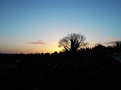 Early morning sunrise (AislingF2012) Tags: blue sun tree galway sunrise finepix fujifilm fu moycullen jv300