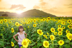 Smiling girl in the sunflowers field with sunflowers (Patrick Foto ;)) Tags: life new pink blue summer portrait people woman plant flower cute green nature girl beautiful beauty smiling yellow closeup female pose garden season asian thailand happy countryside kid pretty child play close natural gardening outdoor expression country joy young sunny fresh teen thai sunflower blonde environment lovely cheerful facial caucasian