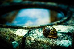 Snail (Jake Goodwin Photography) Tags: blue color colour bird water beautiful bath birdbath shell snail sat