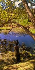 were only waitin' for this moment 2 arise ( NEKO) Tags: life park blue parque green nature forest garden lago agua natureza sunny sp jardim lagoa floresta interlagos arlivre