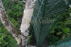 60071594 (wolfgangkaehler) Tags: 2016 southamerica southamerican ecuador ecuadorian latinamerica latinamerican rionapo rionapoecuador rionaporiver rainforest coca cocaecuador laselvalodge observationtower tower