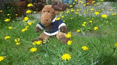 Flam In The Garden. (ManOfYorkshire) Tags: norway norwegian mousse toy dtuffed plants flowers dandelions posing sat garden home sweater holiday souvenir antlers