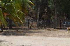 Fence at Columbus Cove beach in Labadee Labadie Haiti (RYANISLAND) Tags: haiti port labadee labadie republicofhait irpubliquedhati repiblikayiti ayiti hatihayti haitian haitiancreole creole portauprince hispaniola greaterantilles antilles sovereignstate caribbean caribbeanisland caribbeanislands island islands caribe beach royalcaribbean saintdomingue haitianhistory haitihistory visithaiti hati hayti republicofhaiti rpubliquedhati