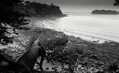 Golfe du Morbihan, B&W, 18 (Patrick.Raymond (3M views)) Tags: bretagne morbihan golfe nikon argentiue mer sae plage expressyourself