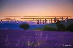 Etendage (Fabienne G) Tags: banon lavande summer night lumire nuit