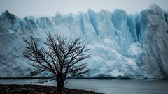 Glaciar Perito Moreno (davidson.santiago77) Tags: iceberg ice gelo glaciar geleira