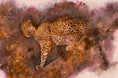 Africa Diaries (AjayGoel2011) Tags: world color nikon nikkor decisivemoment explore creativecommons flickriver africa southafrica wild wildlife safari kruger photoshop photoart ajaygoel