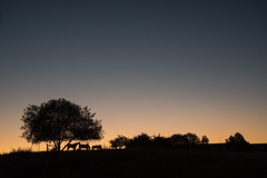 Rural Morning (Borderli) Tags: sky morning sunrise beforesunrise bluehour horses tree silhouettes nature summer pferde baum morgenlicht blauestunde vorsonnenaufgang