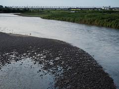 Yasugawa () (Greg Peterson in Japan) Tags: yasugawa wildlife rivers birds japan shiga egretsandherons deba ritto shigaprefecture jpn