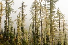IMG_5509 (angelatravels11) Tags: angelacrampton angelatravels blackpeak climbing northcascades tradclimbing unitedstates washington