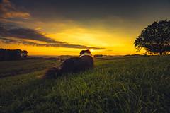 All What I Need (Bokehschtig (ON/OFF)) Tags: aussie australianshepherd tamino dog canine hund htehund shepherd sunset sundown pov sunrise sonnenuntergang bayern bavaria germany deutschland relax tranquility peace peacefulmoment clouds sun sunlight sunbeam sonya7m2 sonya7ii sel1635z
