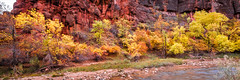 To the Zion Narrows! Nikon D810 Fine Art Zion National Park Autumn Hike! Dr. Elliot McGucken Fine Art Landscape Photography! (45SURF Hero's Odyssey Mythology Landscapes & Godde) Tags: to zion narrows nikon d810 fine art national park autumn hike dr elliot mcgucken landscape photography landscapes nature arts natural bryce canyonautumn winter hdr majestic leaves long exposures sexy hot sexiest legs hottest pretty prettiest ballerina gilr girls woman women blonde blue eyes gorgeous beauty beautiful
