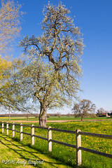 Apple tree, the Nivre (serial_snapper) Tags: rpubliquefranaise france sky shadow landscape tree nivredpartement bourgognefranchecomtrgion ciez bourgognefranchecomt fr