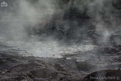 Bacteria Mat geyser (paolo.gislimberti) Tags: parchinazionali nationalparks yellowstonenp parcodiyellowstone touristdestinations meteturistiche geysers geology geologia geologicalphenomena fenomenigeologici geothermalenergy energiageotermica sorgenticalde hotsprings vaporisulfurei sulphurfumes