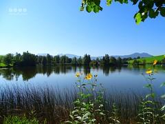 Am Schwaltenweiher - on Schwaltenpond (warata) Tags: 2016 deutschland germany sddeutschland southerngermany schwaben swabia oberschwaben upperswabia schwbischesoberland bayern allgu bayerischesallgu ostallgu alpen alps alpenvorland schwaltenweiher weiher see lake landschaft landscape pond