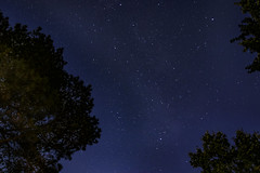 Inside the Forest (Jeffrey Camphens) Tags: stars space night forest long exposure