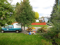 16Sep26 075pe (diffuse) Tags: arborist cutting logging treeremoval backyard chipper chipping branches leaves berries