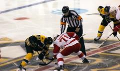 #51 Ryan Spooner and #71 Dylan Larkin take the opening faceoff (Odie M) Tags: nhl hockey icehockey boston tdgarden preseason teamsport sport ice faceoff bostonbruins detroitredwings ryanspooner dylanlarkin mattbeleskey anthonymantha