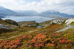 IMG_2332 Autumn in the Mountain (JarleB) Tags: vgslid haukelifjell haukeli hardangervidda rldal autumn hst