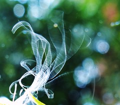 From the soul II ( expressing emotions ) Tags: dandelion seed semilla abstract abstracto art nature naturaleza blur desenfoque