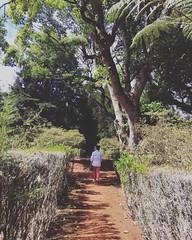 Wandering 🌲🚶🚶♀️🌳 #madeiraisland #madeira #ilovemadeira #instamadeira #igersmadeira #igersportugal